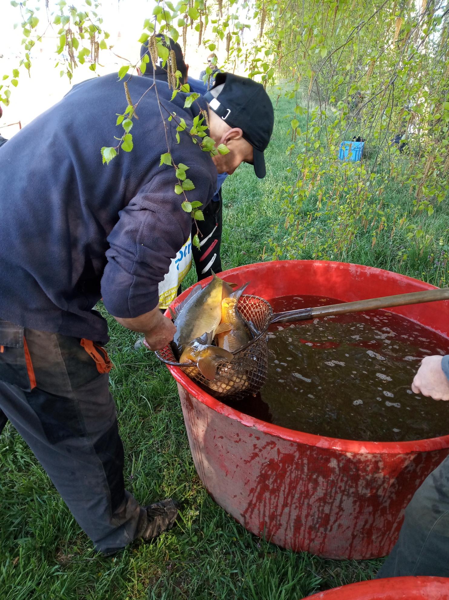 Výlov rybníka 2019 (12)